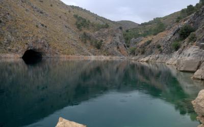 Medusas de agua dulce para Acuario: Todo lo que necesitas saber.